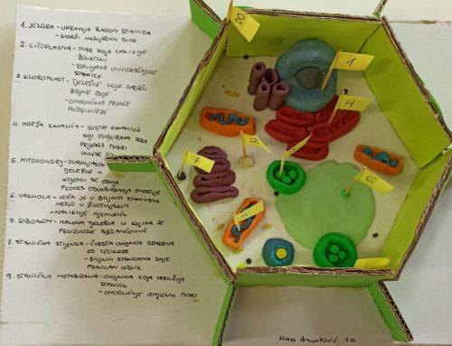 Biologija kreativnih sedmaša